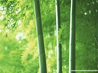 The Lush Bamboo Forest45 pics